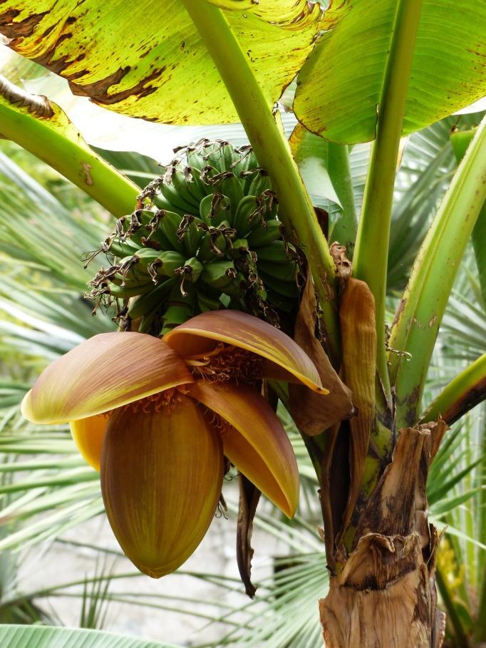 bananaplant-spirituality-purpose