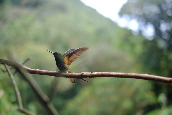 little bird-wind beneath my wings